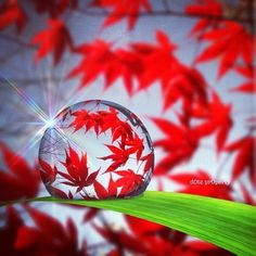 Autumn drop ...