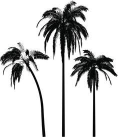 Vectores libres de derechos: coconut palm