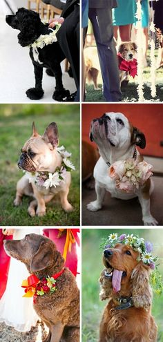 Adorable Wedding Dogs:  Alright, now I don't have to find doggie bridesmaid dresses to appease my loving fiancé!  How cute are these??  Now our girls can look pretty for the wedding!!
