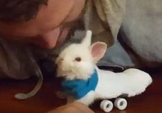 How To Help A Paralyzed Bunny -- The Animal Video Of The Day!!! ... see more at PetsLady.com ... The FUN site for Animal Lovers