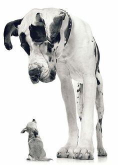 Don't you want to know what each is thinking?   Fotos de perros de Tim Flach - dogs photographs