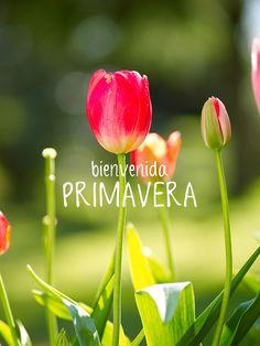 ¡Feliz primavera! | www.jcriss.com Villa Rosa, All Flowers, Hello Everyone, Happy Day, Gods Love, Iphone Wallpaper, Best Quotes, Happy Birthday, Lily