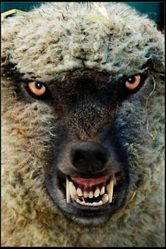 Beware of false prophets, which come to you in sheep's clothing, but inwardly they are ravening wolves. Matthew 7:15  http://astridstaley.wordpress.com/the-truth ...