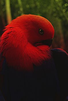 `I saw one of these birds in Florida omg I wanted her sooo bad!!!!!