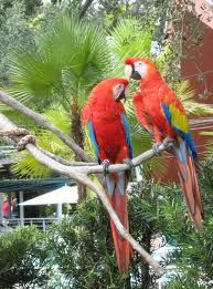 Busch Gardens - Tampa .Once upon a time it had free admission,free beer . My son got his head stuck between the rails of an iron fence. I had to seek help from staff because my husband couldn't stop laughing. My sons screams  panicked the parrotts ,who quickly departed th bird show