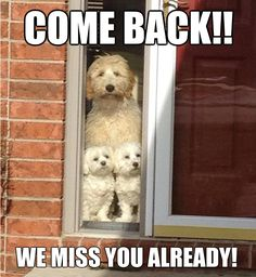 Confessions of a Dozy Dog #36 : Come back!! We miss you already!