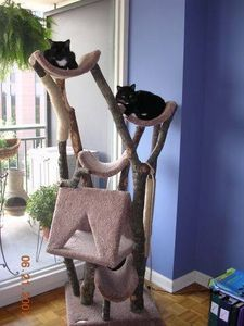How to Make a Cat Tree House with old branches-My cats would LOVE this