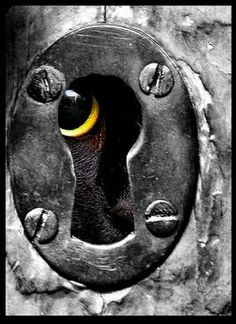 Not a door; not a gate, but a peek-a-boo key hole with a curious cat peeking out!