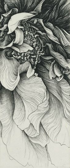 sort of zentangle pen and ink flower pen and ink of flower heavy on exaggerated values to deepen effect of curves in images which are very necessary in