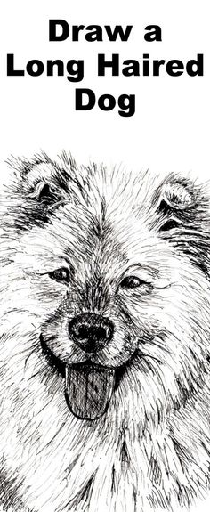 How to Draw a Long Haired Dog in Pen and Ink — Online Art Lessons Art Lessons, Animal Drawings, Drawings, Ink Drawing, Flower Drawing, How To Draw Hair, Ink, Dog Drawing, Drawing Lessons