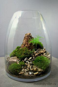 terrarium od Meandry Natury #terrarios #paisajismo