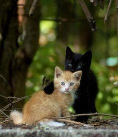 """llbwwb: """" (via I'll protect you! by Lariko - Pixdaus) """""""