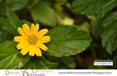 Mini Sunflower :3