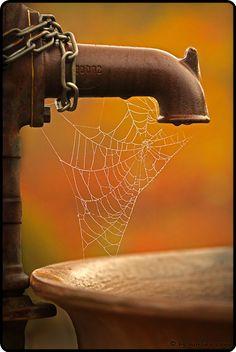 Spider Web & Faucet
