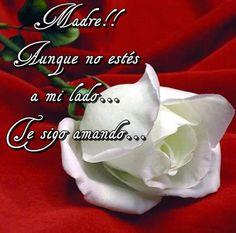 Esta rosa para mi madre ausente!