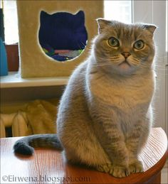 Journal d'un chat : les aventures d'Eirwena