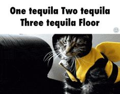 One tequila Two tequila Three tequila Floor / iFunny :)