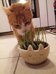 Bol à chat chat 2016