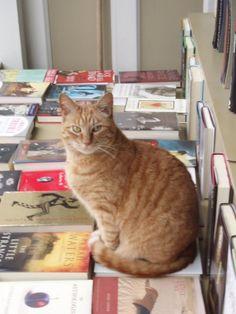 Books | Owen, bookstore cat, Aardvark Books, San Francisco