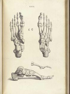 William Cheselden – The Anatomy of the Bones  http://soft-light.ru/pic/print:page,1,125233-william-cheselden-1688-1752.html