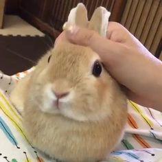 Cute Baby Bunnies, Funny Bunnies, Cute Babies, Funny Bunny Videos, Buy A Rabbit, Pet Rabbit, Rabbit Shop, Rabbit Gif, House Rabbit