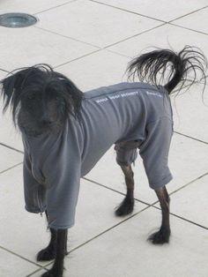 Pyjamas Dog Coats, Pyjamas, Horses, Dogs, Animals, Coats For Dogs, Animaux, Doggies, Horse