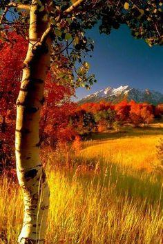 Autumnal landscape & Autumn scenery & 🍁 The post Autumnal landscape Foto Nature, All Nature, Amazing Nature, Fall Pictures, Love Pictures, Landscape Photography, Nature Photography, Photography Contests, Autumn Scenes