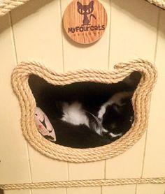 Bridget asleep in her #catcottage #cattree ❤️❤️
