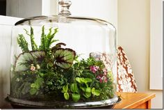 a beautiful terrarium