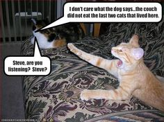 Page 4 of 2986 - World's largest collection of cat memes and other animals Grumpy Cat Humor, Funny Animal Memes, Cute Funny Animals, Funny Jokes, Hilarious, Silly Cats, Funny Cats, Crazy Cats, Big Cats