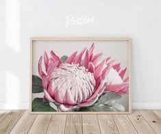 Protea flower print King Protea flower Flower print Flower Protea Art, Protea Flower, Flowers, King Protea, Floral Watercolor, Watercolor Ideas, Botanical Wall Art, Flower Photography, Large Wall Art