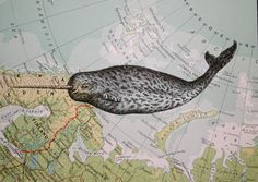Oh, the mythical narwhal. You do exist ... even if it's only in our thoughts.