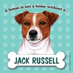 What would we do without our Jack Russell Terriers? Your fridge needs this magnet!  www.jackrussellemporium.com
