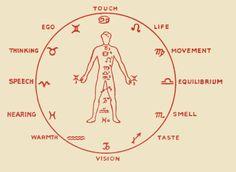 Image result for 12 senses steiner