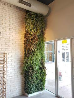 קירות ירוקים וחיפויי קיר איכותיים לפנים ולחוץ - קרת צמחייה מלאכותית Plants, Plant, Planets