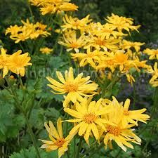 What are the best flowering perennials for a shade garden? You will be glad to know that there are a lot of wonderful and beautiful options available for the low light garden. #garden