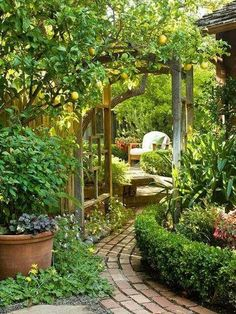 Love the lemon tree over the arbor