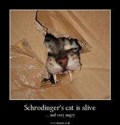 Schrodinger's Cat is alive and very angry #catsinboxes #meowowow