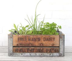 Metal Dairy Crate and adorable little herb garden