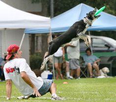 Disc Dog vía dogservicesunlimited.com