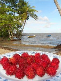 Ramboetans. Galibi. Suriname.