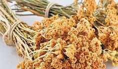 İbrahim Saraçoğlu tırnak mantarı bitkiel tedavi