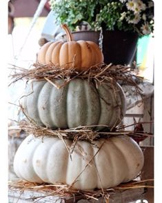 Easy, natural pumpkin decor to take you from Halloween through Thanksgiving! I used a similar idea in wrought iron urns for my front porch! White Pumpkins, Fall Pumpkins, Fall Home Decor, Autumn Home, Blue Fall Decor, Thanksgiving Decorations, Halloween Decorations, Pumpkin Decorations, Pumpkin Ideas
