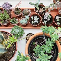 My bedroom is being taken over  . . . . . . #urbanjungle #urbanjunglebloggers #houseplants #houseplantclub #cactus #cactusclub #cactuslove #cactuslover