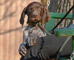 Last Litter's Last Pup