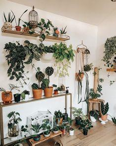 Room With Plants, House Plants Decor, Plant Decor, Wall Of Plants, Plant Aesthetic, Aesthetic Room Decor, Indoor Garden, Indoor Plants, Plantas Indoor