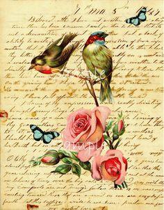 Birds written paper