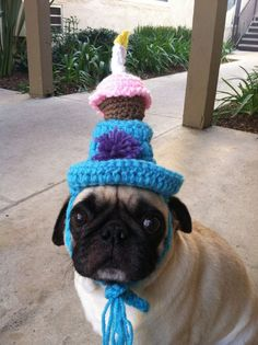 7b983293d08 Birthday Cupcake Top Hat-Hats For Dogs-Pet Birthday-Pugs-Dog  Clothing-PugLover-Hats for Dogs-Dog Birthday Hat-funny dog hats-dog  costume-AFV by PugsNGiggles ...