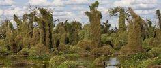 Tercer humedal más grande de América, el bañado La Estrella es un paraíso para observar aves y fauna.