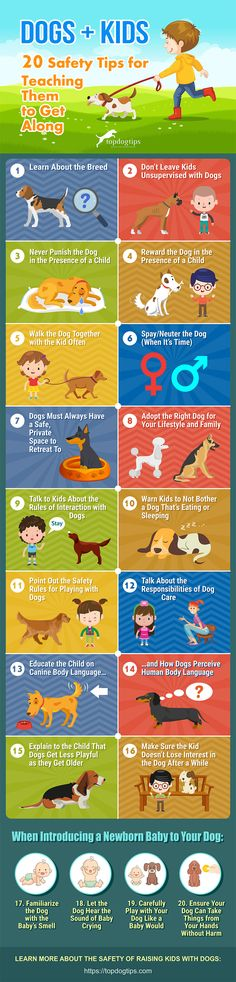 Infographic: 20 Safe Infographic: 20 Safety Tips for Teaching Kids and Dogs to Get Along New Puppy, Puppy Love, Safety Tips, Safety Rules, Dog Crying, Hamster, Dogs And Kids, Dog Quotes, Child Safety